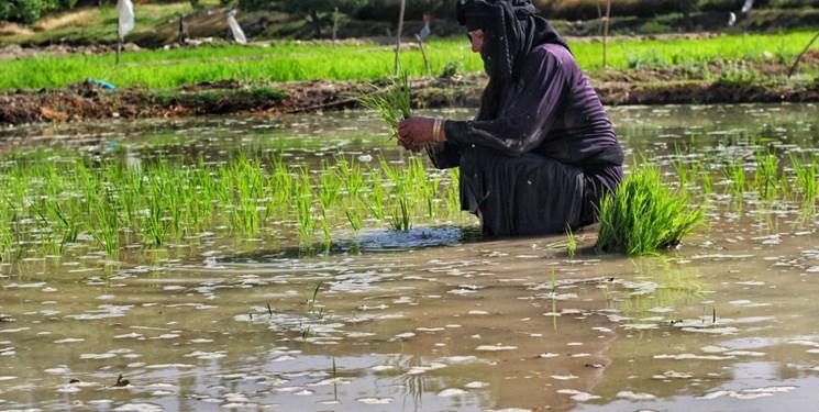 نشا کاری در استان ایلام