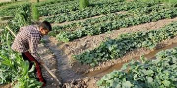 نمونههای برتر کشاورزی در گرمسار تجلیل شدند