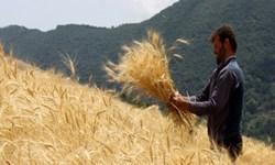 پرداخت ۹۸ درصد کل مطالبات کشاورزان گندمکار گلستان