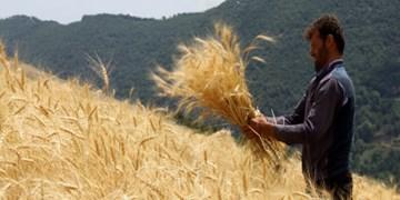 سهم ۱۰ درصدی کشت گندم خراسان شمالی در اسفراین