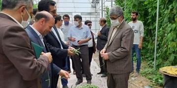 محصولات شهرک گلخانهای پارسآباد صادرات محور میشود