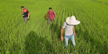 آریانپور: کشاورزان نهادهها را به دلار میخرند اما محصولشان را به ریال میفروشند