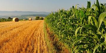 ۶۲ طرح کشاورزی در سمنان تسهیلات دریافت کردند/ عملکرد بانکها رضایتبخش نبود