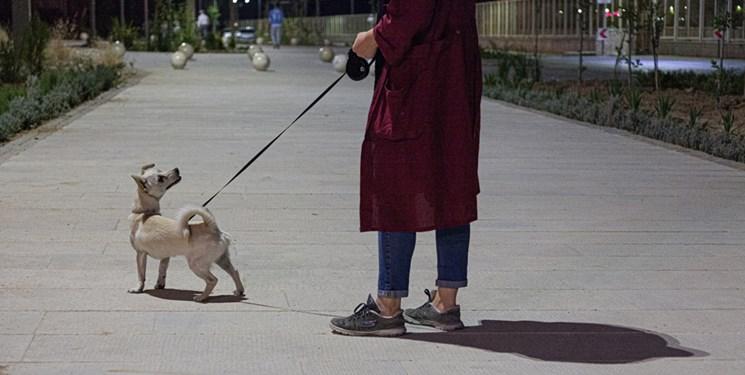 برخورد با سگگردانی در دستور کار دادستانی خراسان رضوی است