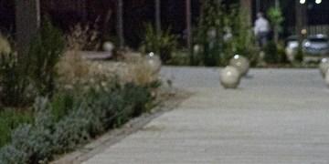 جولان سگها در پارک های تهران در روزهای کرونایی/ مدیران شهری: فقط می توانیم تذکر دهیم