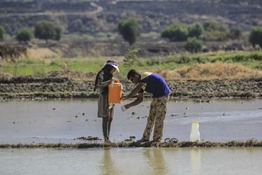 با اینکه آب و هوای دشت سوسن نسبت به مناطق دیگر خوزستان خنک تر است، با اینحال کارگران درفصل تابستان بیشتر تشنه می شوند.