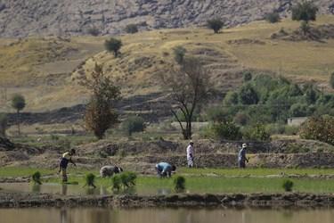 بنابر گفته کشاورزان این منطقه ممنوعیت کشت در این منطقه وجود ندارد و با توجه به همجواری با رودخانه کارون، آب مورد نیاز خود را از چشمه های دائمی اطراف روستا تهیه می کنند.