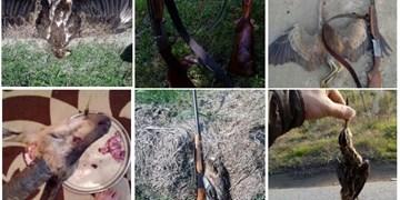 شکارچی حرفهای در آمل راهی زندان شد