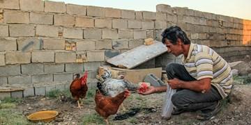 فیلم|مستاجری که  بیابان نشین شد
