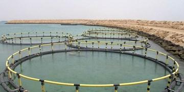سهم 3000 تنی لرستان از پرورش ماهی در قفس