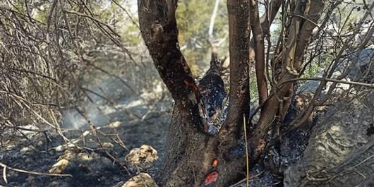 آتش در مراتع و جنگلهای کهگیلویه و بویراحمد/حضور گروههای جهادی برای اطفاء حریق مراتع بویراحمد