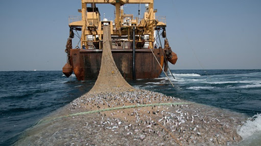 13990407000022 Test NewPhotoFree - گوفهکشی بلای جان زیستبوم دریایی