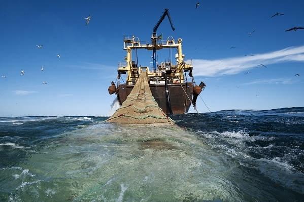 13990407000024 Test NewPhotoFree - گوفهکشی بلای جان زیستبوم دریایی