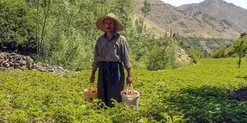 اجرای طرح روستای بدون بیکار در ۴۰ روستای استان زنجان