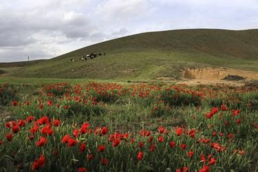 طبیعت ارسباران/ آذربایجان شرقی