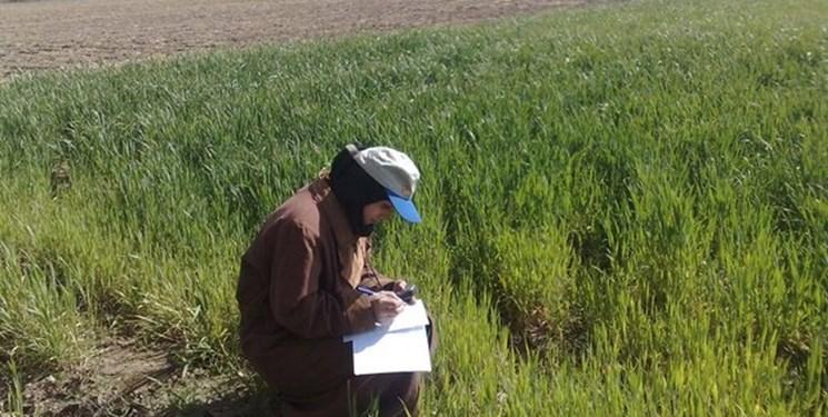اجرای طرح بسیج همگام با کشاورز در ۵۰۰ روستای زنجان
