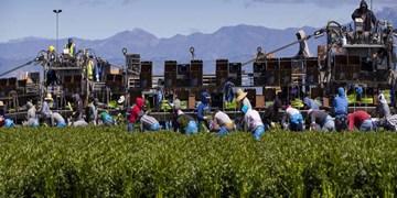 همه گیری کرونا باید شیوه کشاورزی جهانی را دگرگون کند