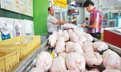 استحصال بیش از ۳۱ هزار تن گوشت دام و طیور بهداشتی در آذربایجان غربی