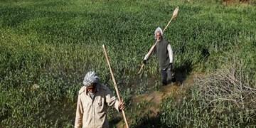 افزایش ۳۰ درصدی زکات کشاورزان خوزستان علیرغم وقوع سیل