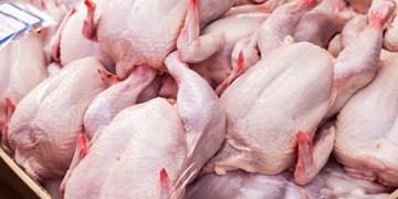 مشکلی در زمینه تولید مرغ وجود ندارد/ ۷۰۰ تن مرغ منجمد در سمنان ذخیره شد