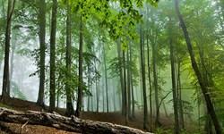 کاشت 70 میلیون اصله درخت در ترکمنستان طی 22 سال