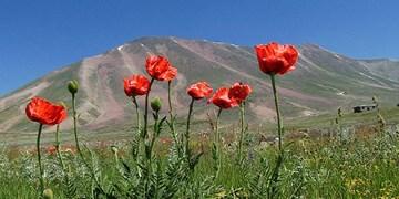 « سهند » عروس کوههای ایران