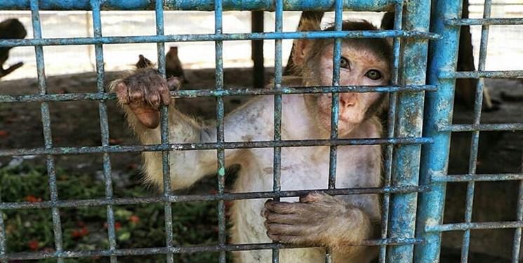 سلامت حیوانات باغوحش هویزه در گرو بیتوجهی مسئولان