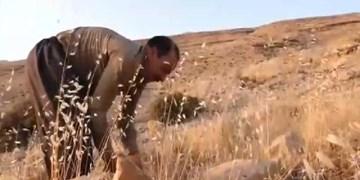فیلم| ارادهای که کوه را هموار و آن را به باغی پر ثمر تبدیل کرد
