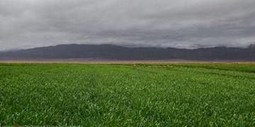 پایان برداشت محصول جو از مزارع ارسنجان