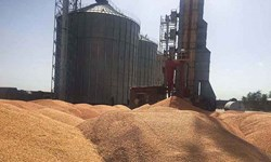 ذخیره بیش از 4 میلیون تن گندم در انبارهای شرکت بازرگانی دولتی ایلام