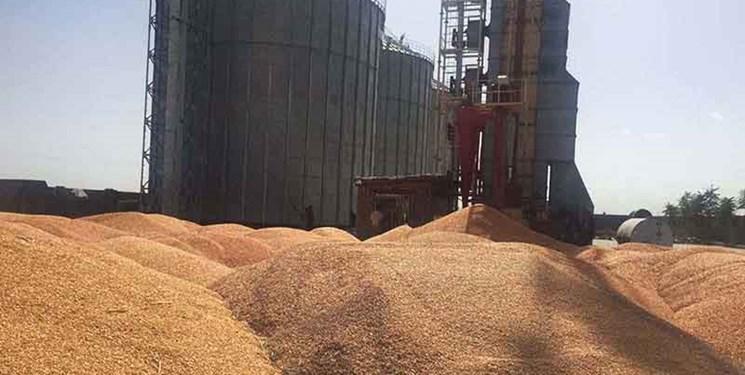 خرید تضمینی بیش از ۶۸ هزار تن گندم در جنوب شرق استان تهران