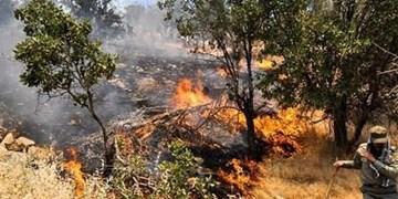 بخش عظیمی از جنگل های زاگرس در ۲ سال گذشته سوخته است