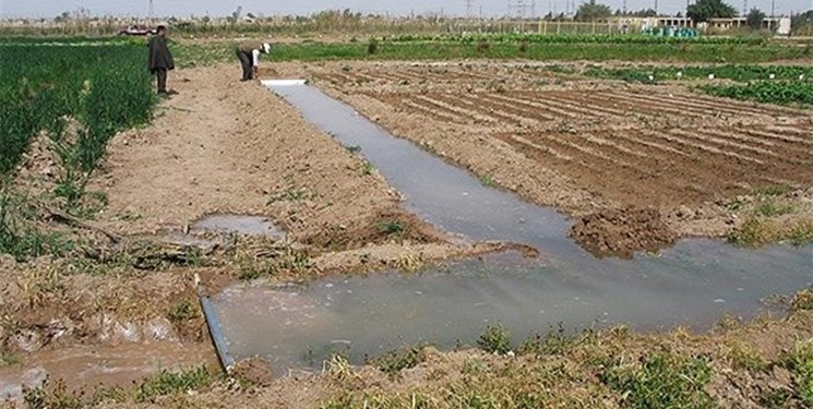آب در 77 درصد اراضی کشاورزی خراسان رضوی همچنان هدر میرود