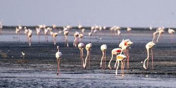 دیماه امسال انجام میشود/انتقال 650 میلیون متر مکعب آب رودخانه زاب به دریاچه ارومیه