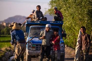 کشاورزان  منطقه سده لنجان اصفهان کار کشت را از اوایل تیر ماه شروع می کنند.