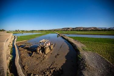 قبل از نشاء زمین شالیزار سه بار شخم زده میشود که مرحله آخر ان قبل از شروع نشاء کاری است.