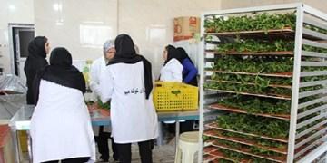 حمایت مالی بنیاد برکت از طرحهای اشتغالزایی در بافق