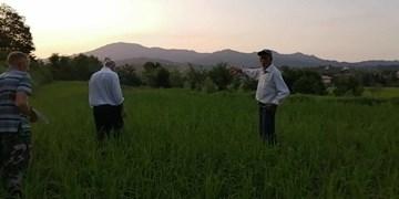 ماجرای گلایه کشاورز گیلانی/تنش آبی در ۵۰ هکتار از مزارع اطاقور