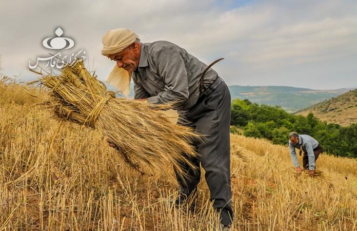 13990419000047 Test NewPhotoFree - گام مجلس برای حمایت از کشاورزان/ تعیین نرخ خرید تضمینی محصولات با همفکری کشاورز