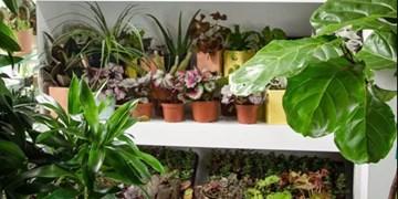 اثرات معجزهآسای گیاهان آپارتمانی بر سلامت