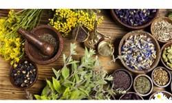 گنجینه گیاهان دارویی در طبیعت ایلام/ برداشت 90 تن گیاه دارویی در سال گذشته