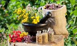 450 گونه گیاهان دارویی  در آذربایجان شرقی/ تولید 18 هزار تن انواع گیاهان دارویی در استان