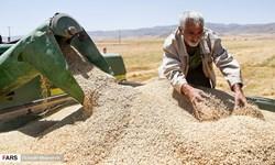 وزیر جهاد زیر تیغ حذف بودجه خودکفایی و واردات گندم/ امنیت غذایی در مسلخ منفعت سیاستبازان