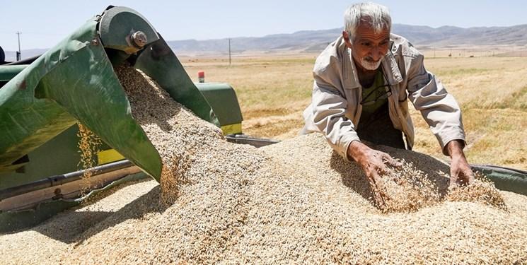 خرید  120 هزار تن گندم از کشاورزان لرستانی/ واریز پول به حساب گندمکاران