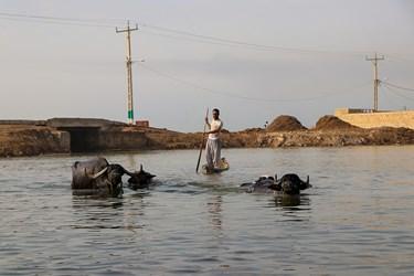 بخش عمده جمعيت شهرها و روستاهای اطراف تالاب، هزینه های زندگی خود را  از طریق  نگهداری و پرورش گاومیش تامین می کنند.