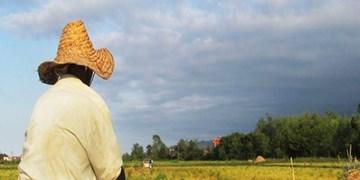 ورود محصولات کشاورزی به بورس نقش دلالان را کاهش میدهد