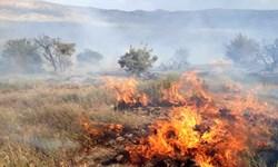 مهار آتشسوزی تالاب بینالمللی شادگان