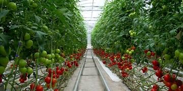 توسعه کشت گلخانهای در سمنان پیگیری میشود