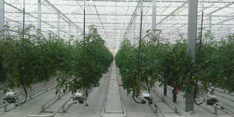 احداث و راهاندازی 511 گلخانه کوچک مقیاس در آذربایجانشرقی / تولید 50 هزار تن انواع محصولات گلخانهای