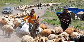 رشد ۱۲ درصدی تولیدات عشایر استان آذربایجانشرقی/ تولید  ۲۰ درصد گوشت، شیر و فرآوردههای دامی